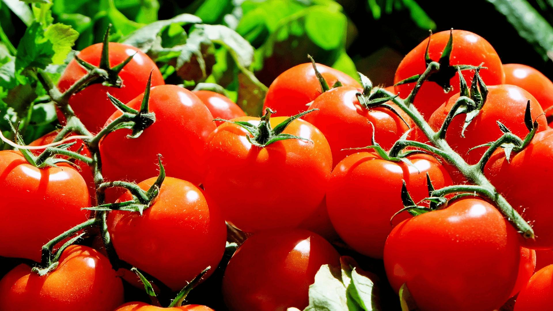 czego nie jeść zimą pomidory