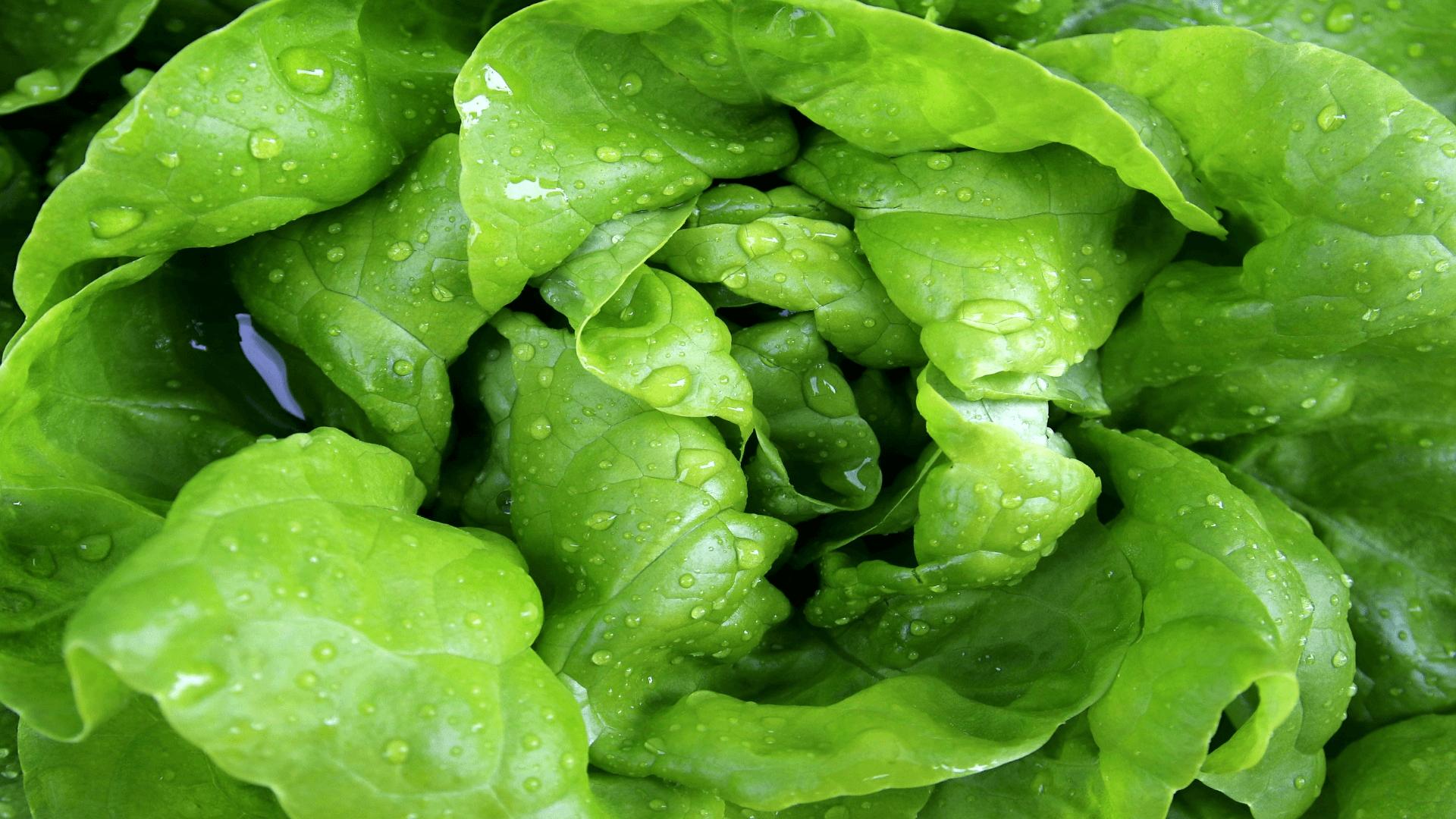 czego nie jeść zimą sałata
